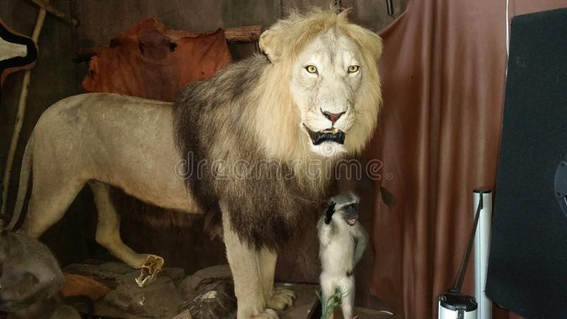 заполненный львев стоковое изображение