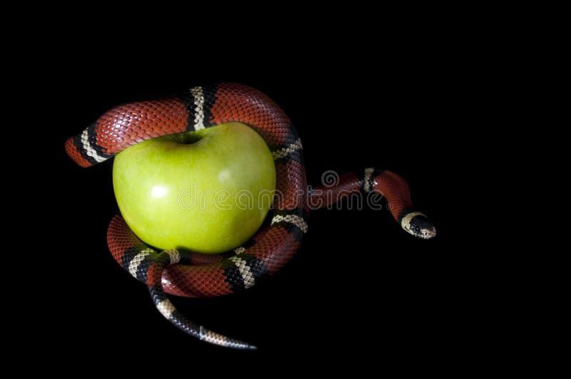 запретный плод стоковое фото rf