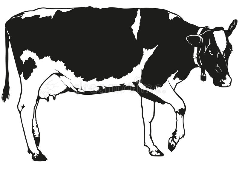 Запятнанная корова молока иллюстрация штока