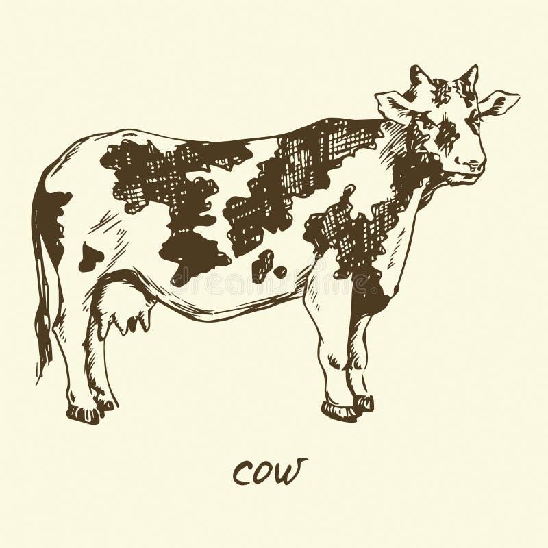 запятнанная корова иллюстрация вектора