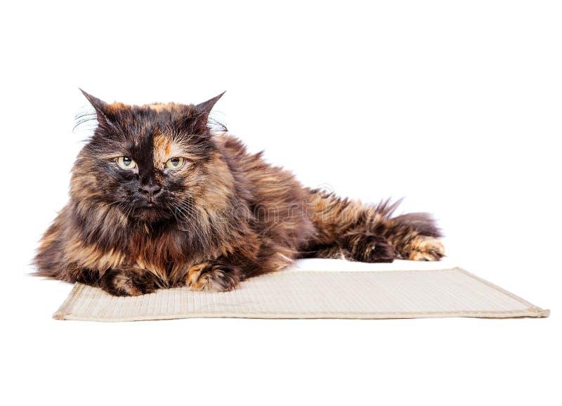 Запятнанный лежать кота стоковые изображения