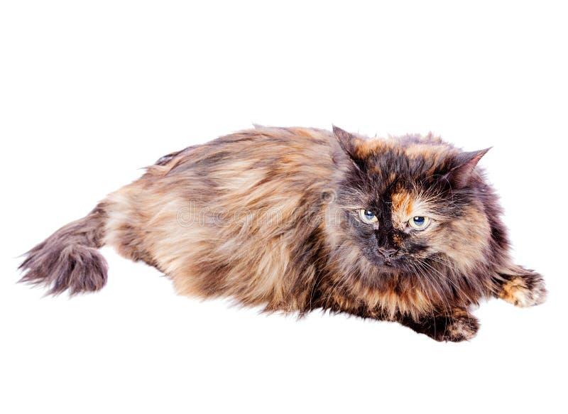 Запятнанный лежать кота стоковое фото
