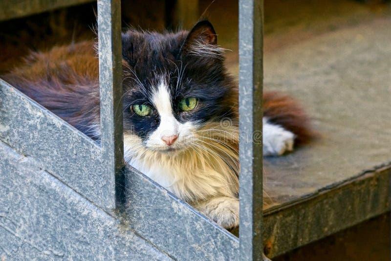 Запятнанный кот лежит за серыми металлическими стержнями решетки стоковое изображение