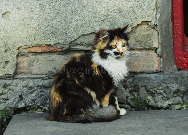 Запятнанный кот сидит на двери и ждет для еды стоковые фотографии rf