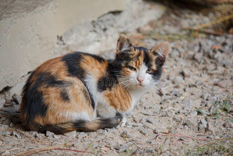 Запятнанный рассеянный котенок сидя на дороге стоковые фотографии rf