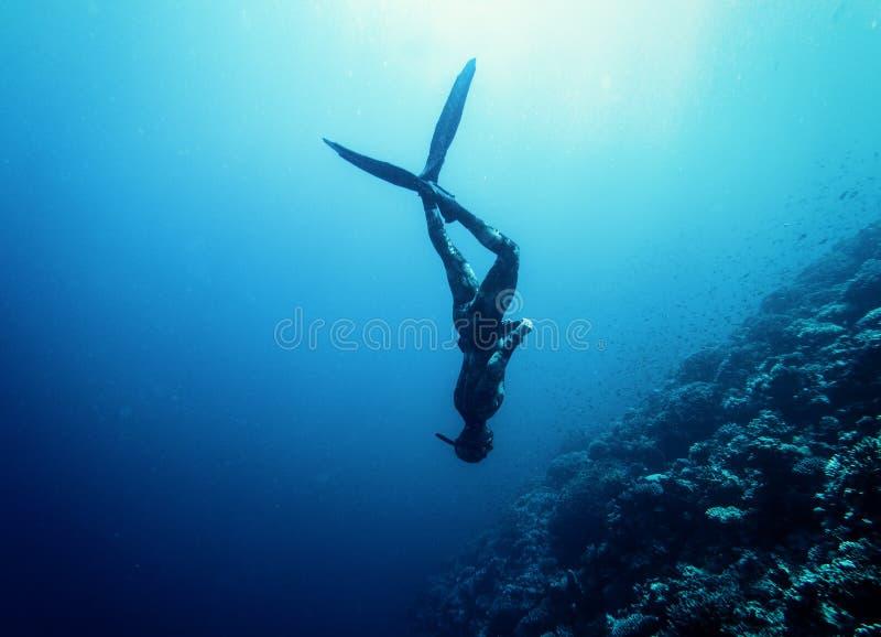 Заплыв Freediver в море стоковое фото rf