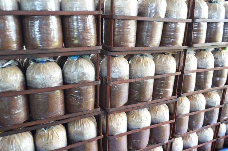 Зараженная сумка гриба стоковая фотография rf