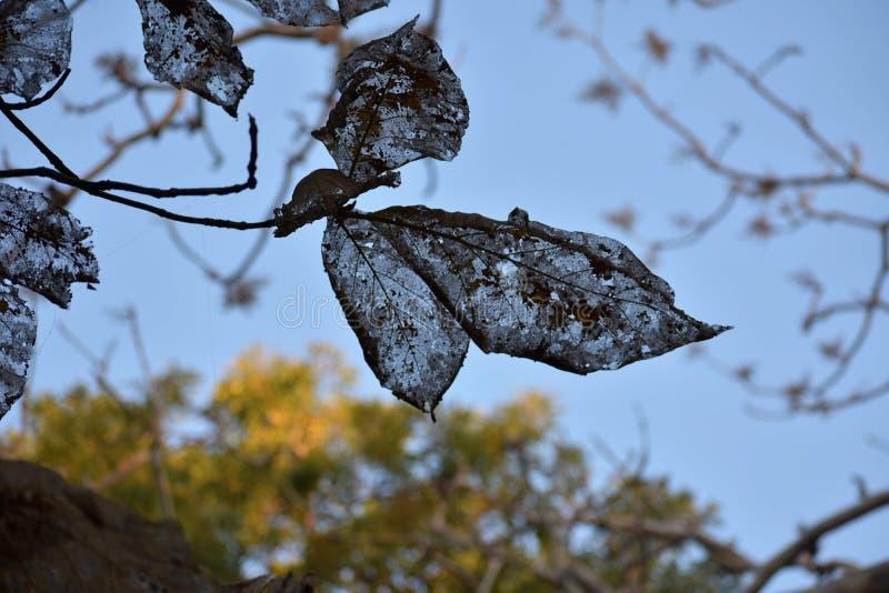 Зараженное дерево стоковое фото rf