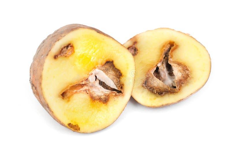 Зараженные картошки стоковое фото