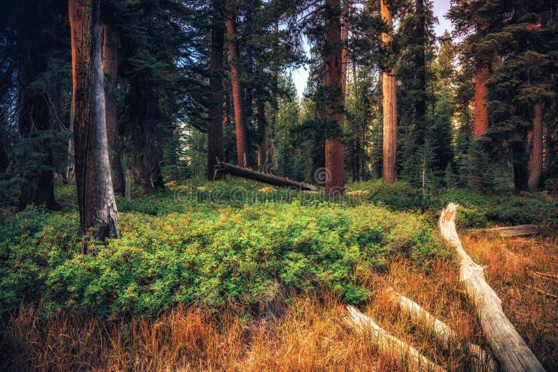 Зарево в лесе стоковая фотография rf