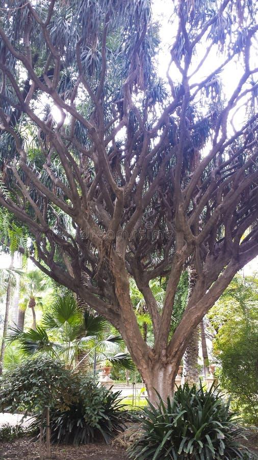Зарезервированное дерево в ботаническом саду из Катании стоковые изображения