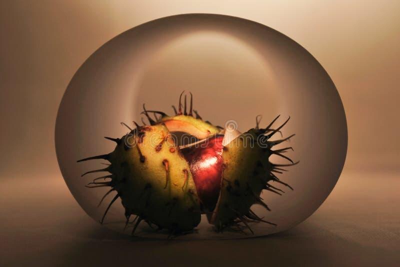 зародыш стоковая фотография rf