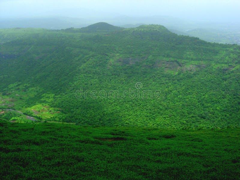 заросший лесом зеленый ландшафт стоковое фото rf