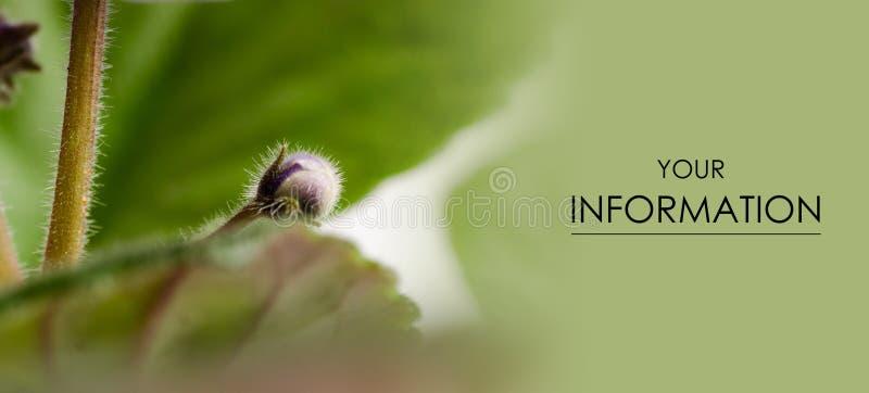 Засадите макрос красоты бутона цветка бутона лист фиолетовый естественный стоковые фото