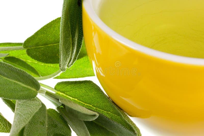 засадите мудрый чай стоковое изображение rf