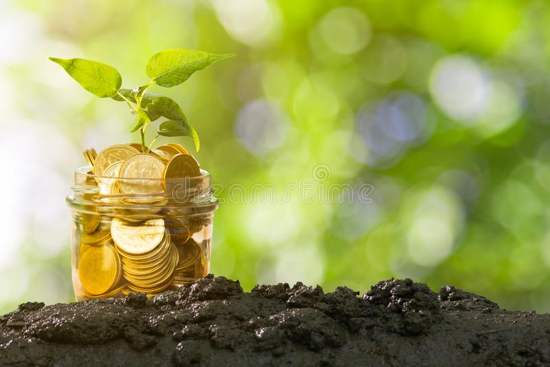 Засадите расти в монетках сбережений на почве с зелеными предпосылкой Bokeh, финансами дела и концепцией денег стоковое фото rf