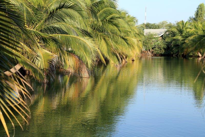 Засаженный кокос стоковые фото