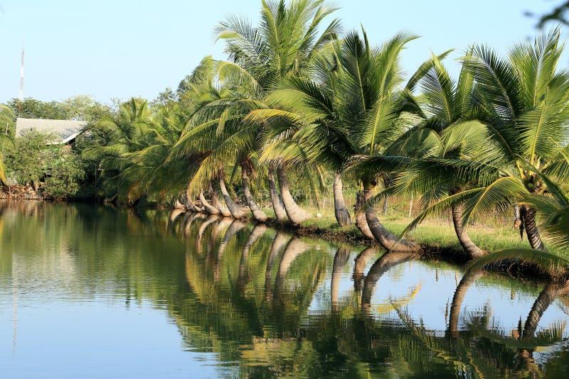 Засаженный кокос стоковое изображение