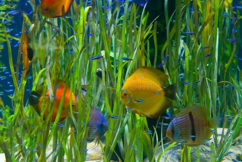Засаженный тропический аквариум с рыбами стоковое изображение rf