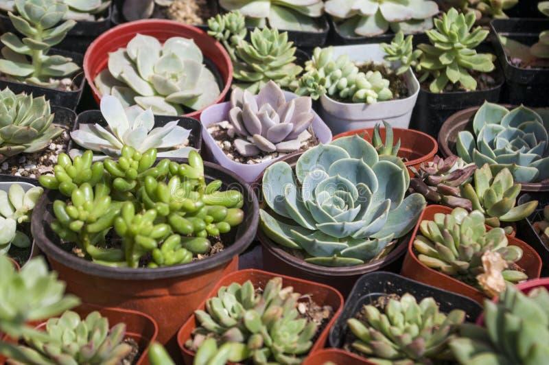 засаживает succulent стоковая фотография rf