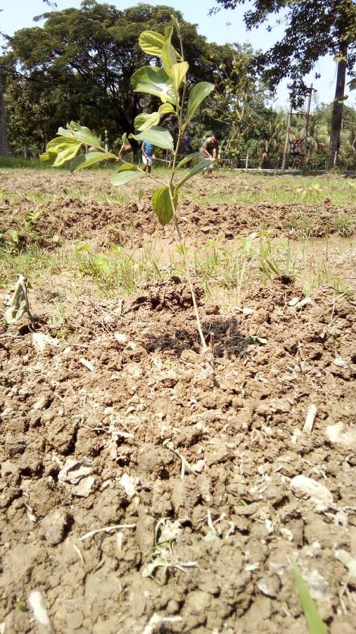 Засаживать дерево на районе деревни стоковое изображение rf