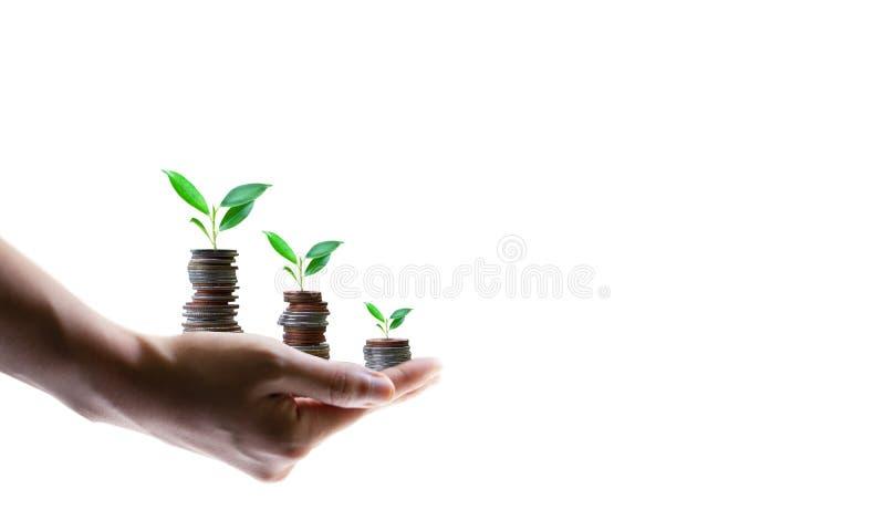 Засаживать от концепций роста дела монеток стоковые изображения rf