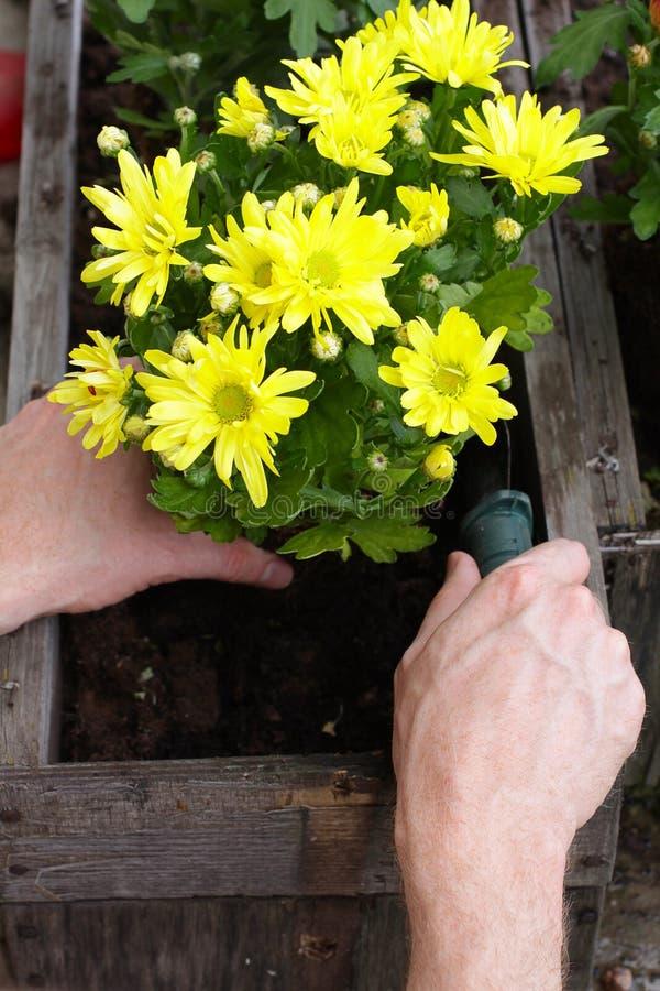 засаживать человека сада цветка стоковое изображение rf