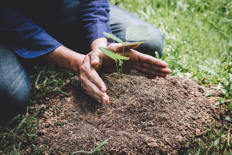 Засаживающ дерево, 2 руки молодого человека засаживали саженцы и дерево растя в почву пока работающ в саде как спасение стоковые изображения