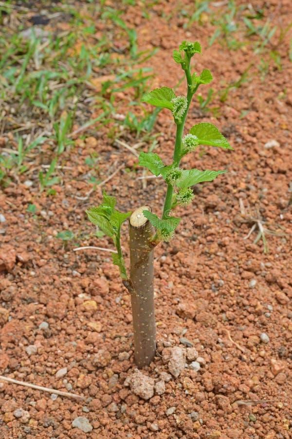Засадите и культивируйте дерево себя в домашней смеси сада стоковое изображение