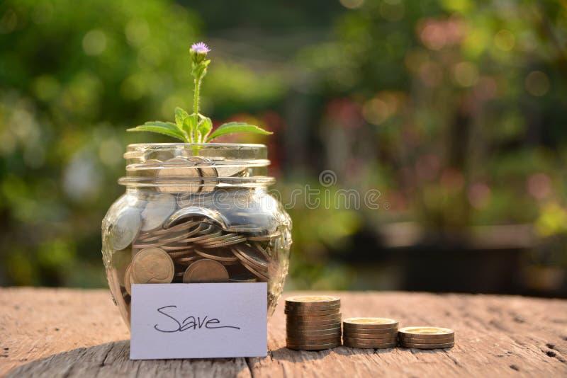 Засадите расти из монеток для сохраньте деньги и финансовую концепцию стоковое фото rf