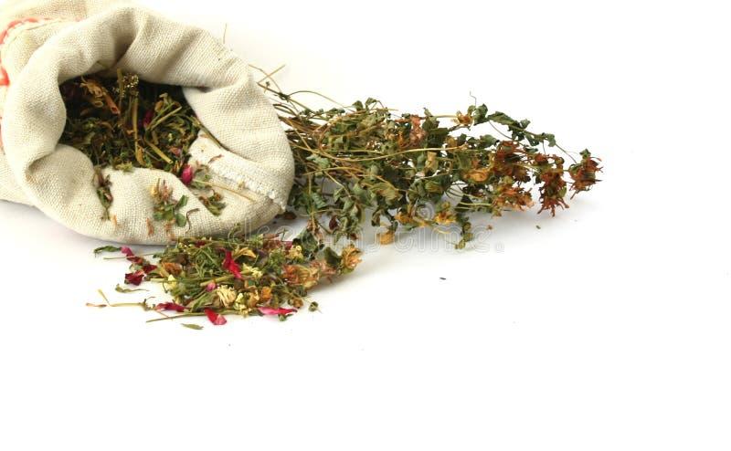 засевает sorcery травой травяной микстуры стоковое изображение