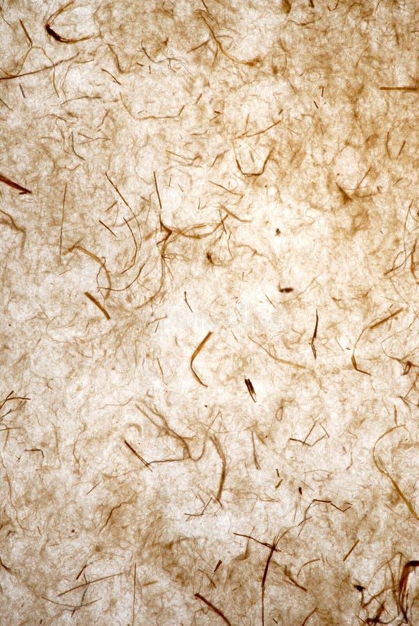 засевайте бумага травой стоковое изображение rf