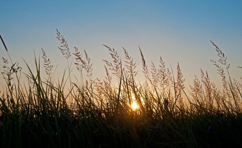 Засевайте зеленое свежее небо травой захода солнца земли заводов sward лужайки стоковые фото