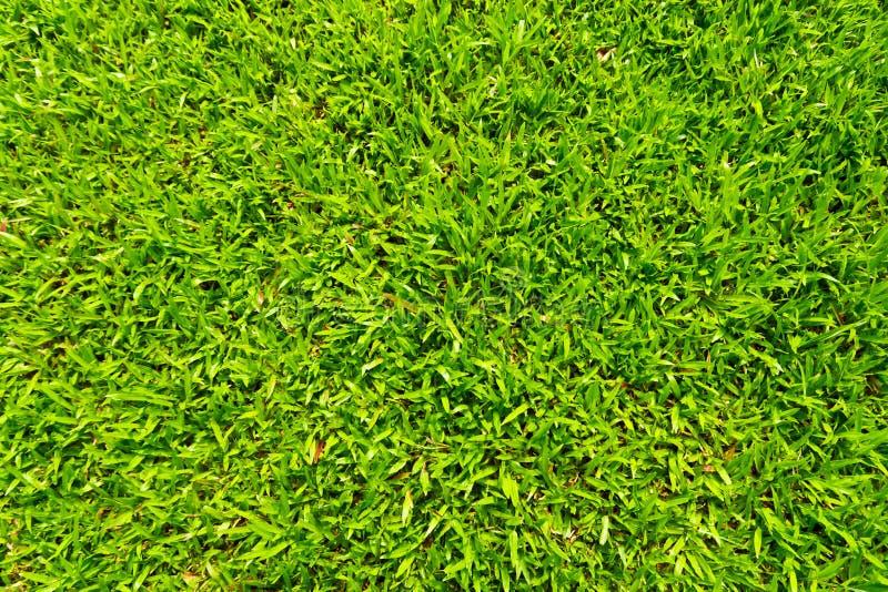 засевайте текстура травой стоковые изображения rf