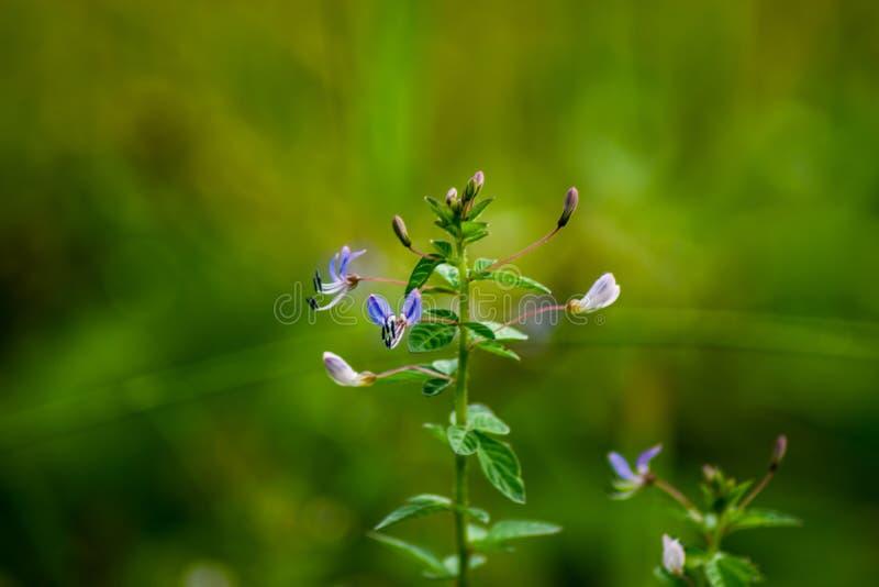 Засевайте трава травой цветков растя вверх в саде на местном парке в сельской местности стоковая фотография