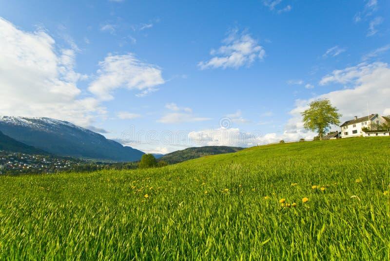 засевайте холм травой мирный стоковая фотография rf