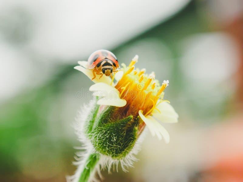 Засевайте цветки и ladybug травой с стилем влияния фильтра ретро винтажным стоковое фото