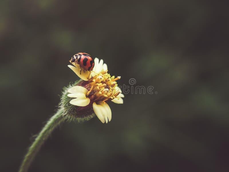 Засевайте цветки и ladybug травой с стилем влияния фильтра ретро винтажным стоковое фото rf
