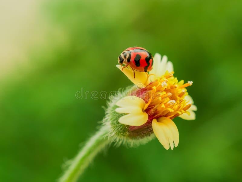 Засевайте цветки и ladybug травой с стилем влияния фильтра ретро винтажным стоковые изображения