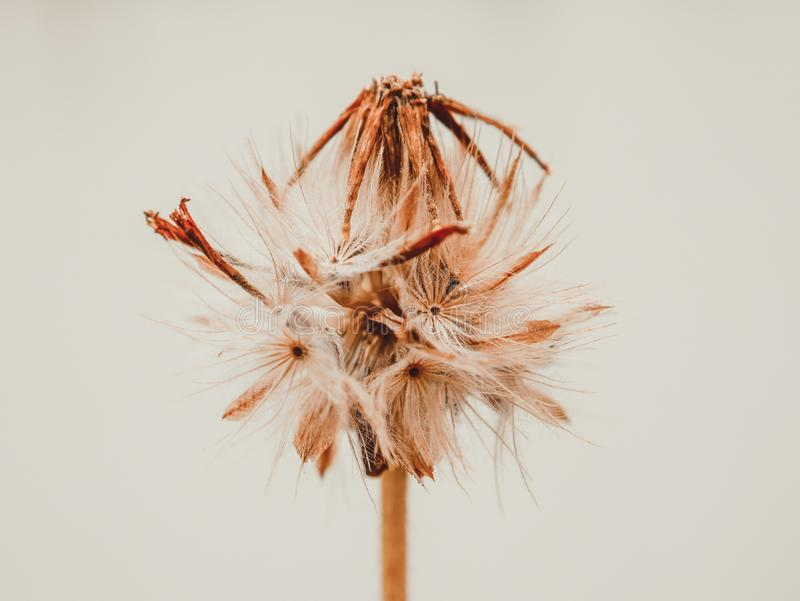 Засевайте цветки травой с стилем влияния фильтра ретро винтажным стоковое изображение