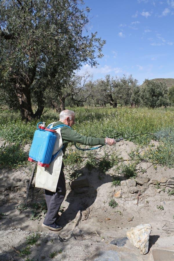 засоритель пожилого пестицида хуторянина распыляя стоковое изображение rf