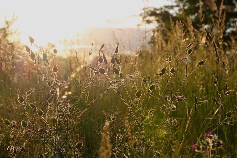 Засорители в заходе солнца стоковые фотографии rf
