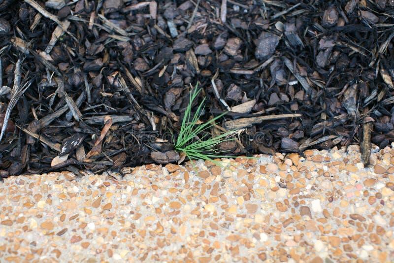 Засоритель растя вдоль тротуара стоковое изображение rf