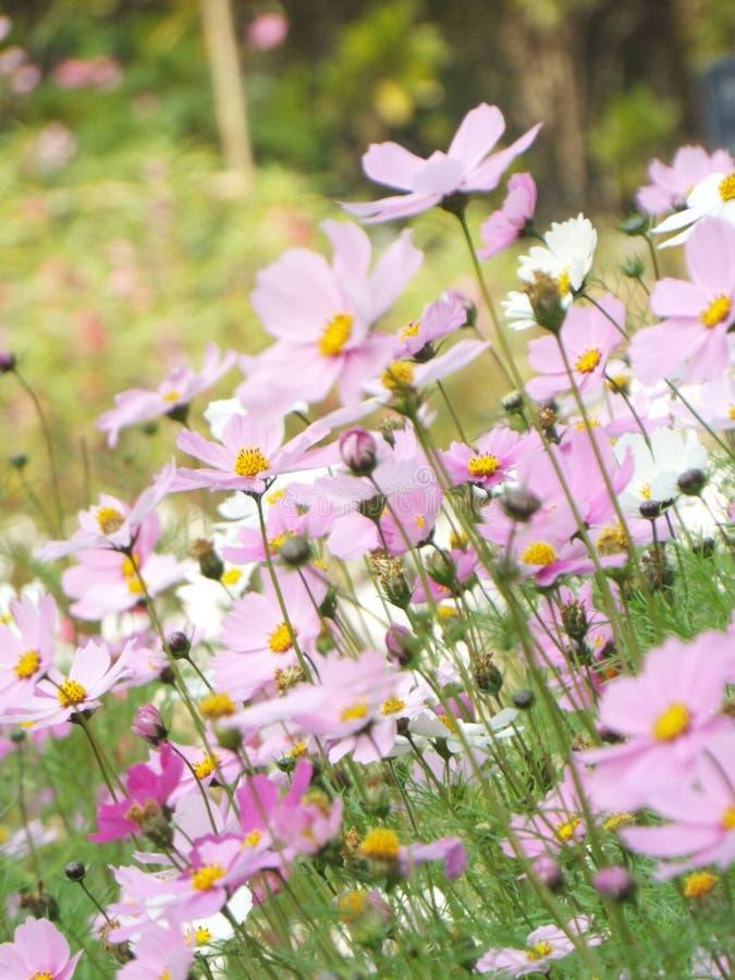 Заставьте замолчать цветок свое хорошее и самое лучшее изображение больше всего стоковое фото