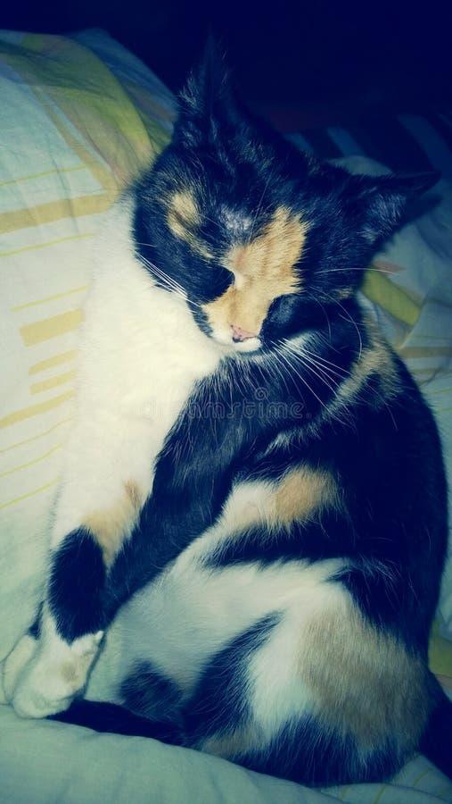 Застенчивый кот стоковые изображения