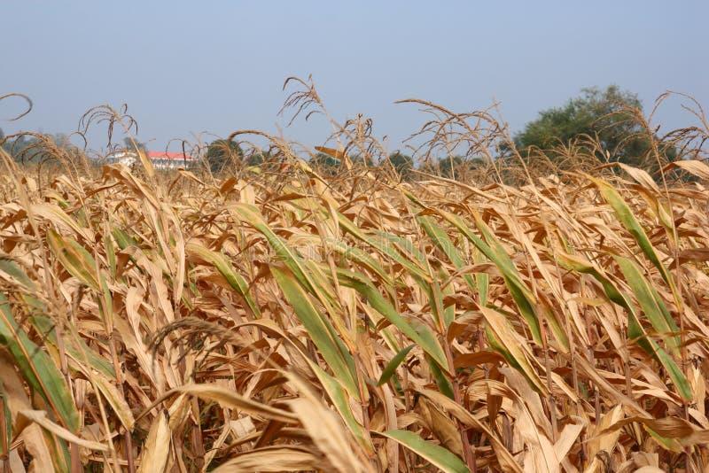 засуха бедствия стоковые изображения rf