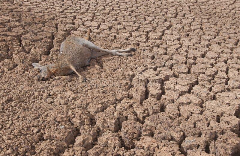 Засуха в Австралии стоковые изображения rf