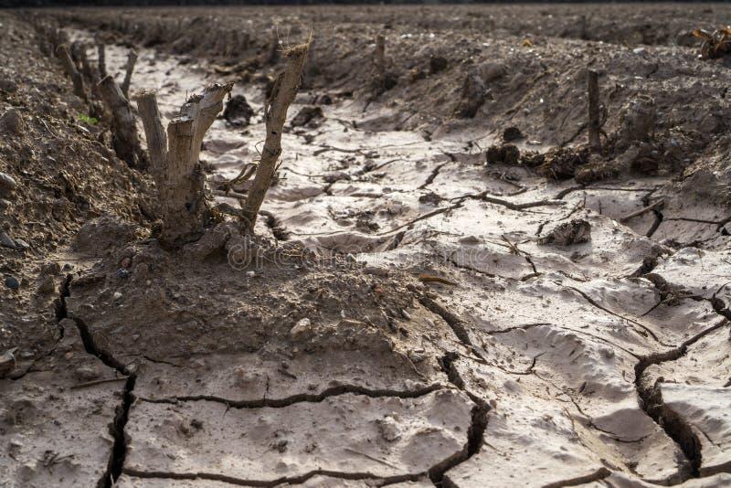 засуха стоковые изображения rf