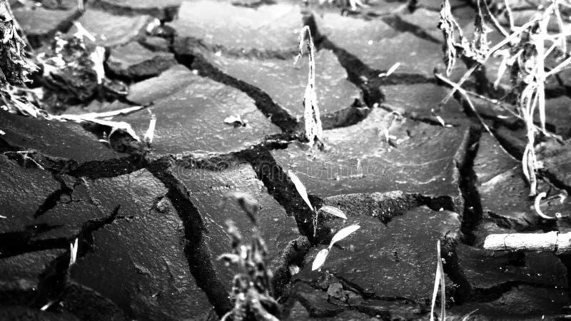 засухи стоковые изображения rf