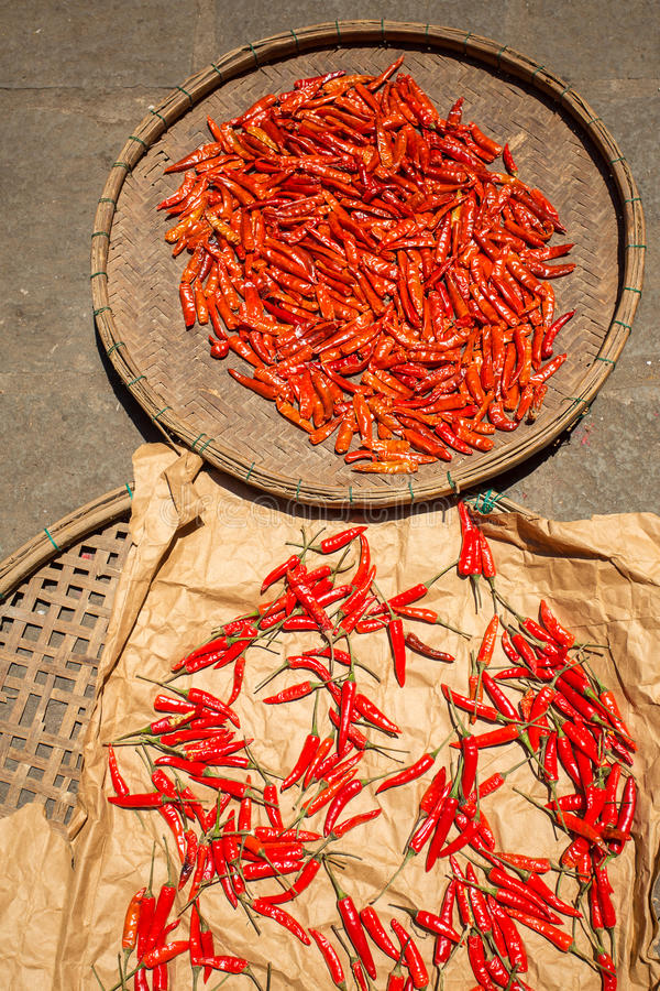 Засыхание перца красных чилей в солнце стоковая фотография